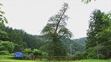 #173「小原の国指定天然記念物」